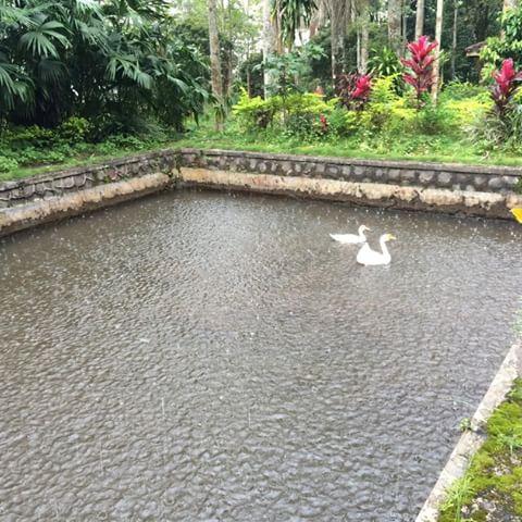 Wisata Kec Semen Kab Kediri Wisatakecamatansemen Instagram Taman Bunga Kelir