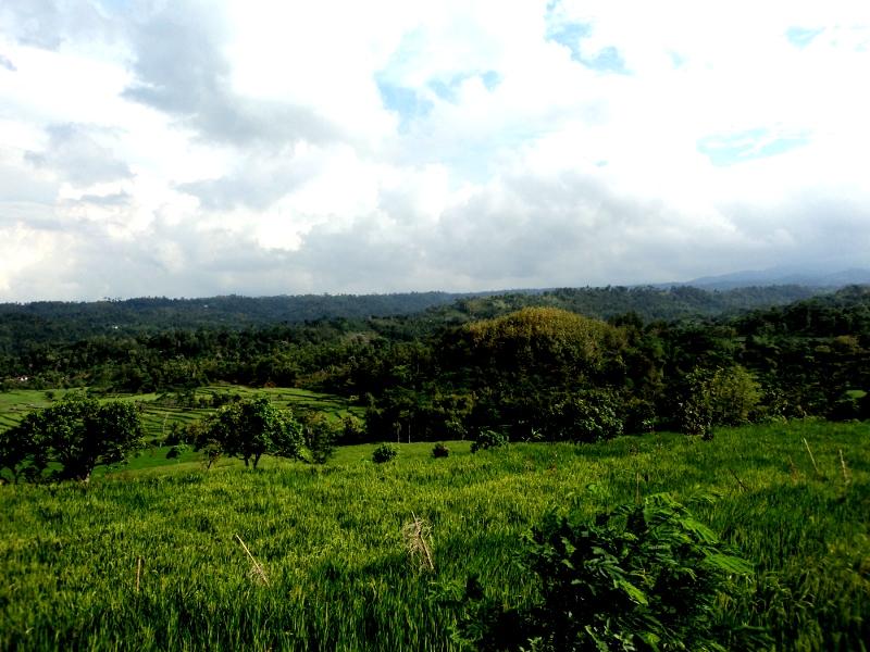 Sarana Informasi Jejak Indah Kediri Taman Tirtoyoso Wisata Sumber Podang