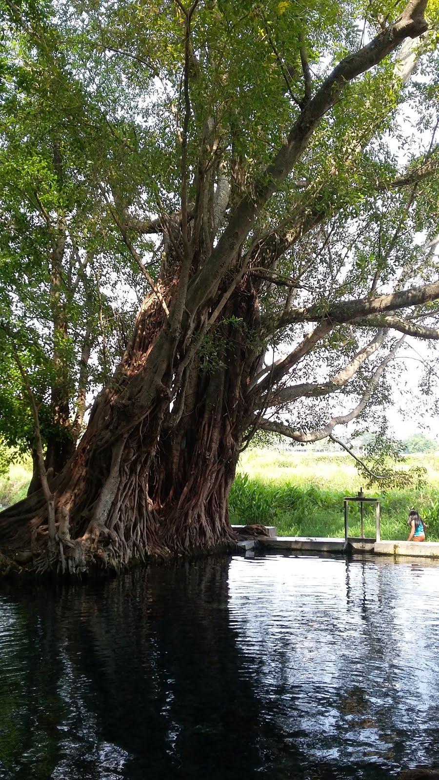 Umbul Manten Menikmati Kesegaran Mata Air Jernih Jawa Tengah Kab