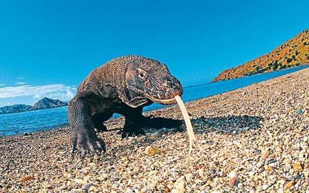 10 Objek Wisata Kupang Menarik Blog Vokamo Pulau Komodo Waterpark