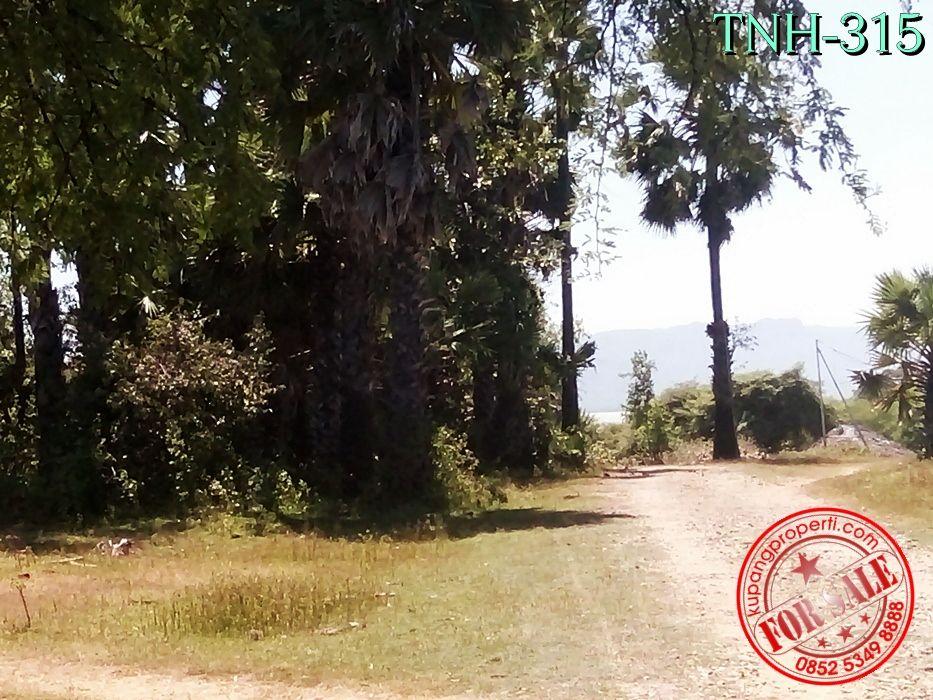 Tanah Dijual Dekat Pantai Kupang Ntt Kelapa Tinggi Kab