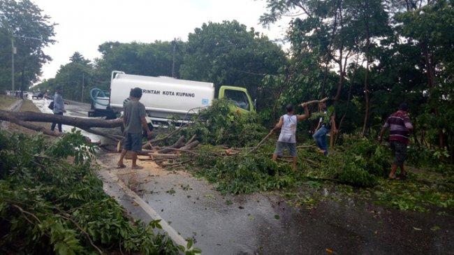 Kupang News Pos Hujan Disertai Angin Kota Pohon Tumbang Badan