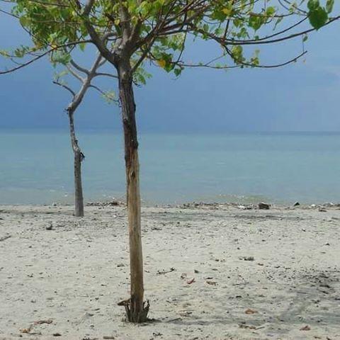 Images Pulautimor Instagram Ntt Kupang Kefamenanu Indonesia Pantai Sasando Sasandorote