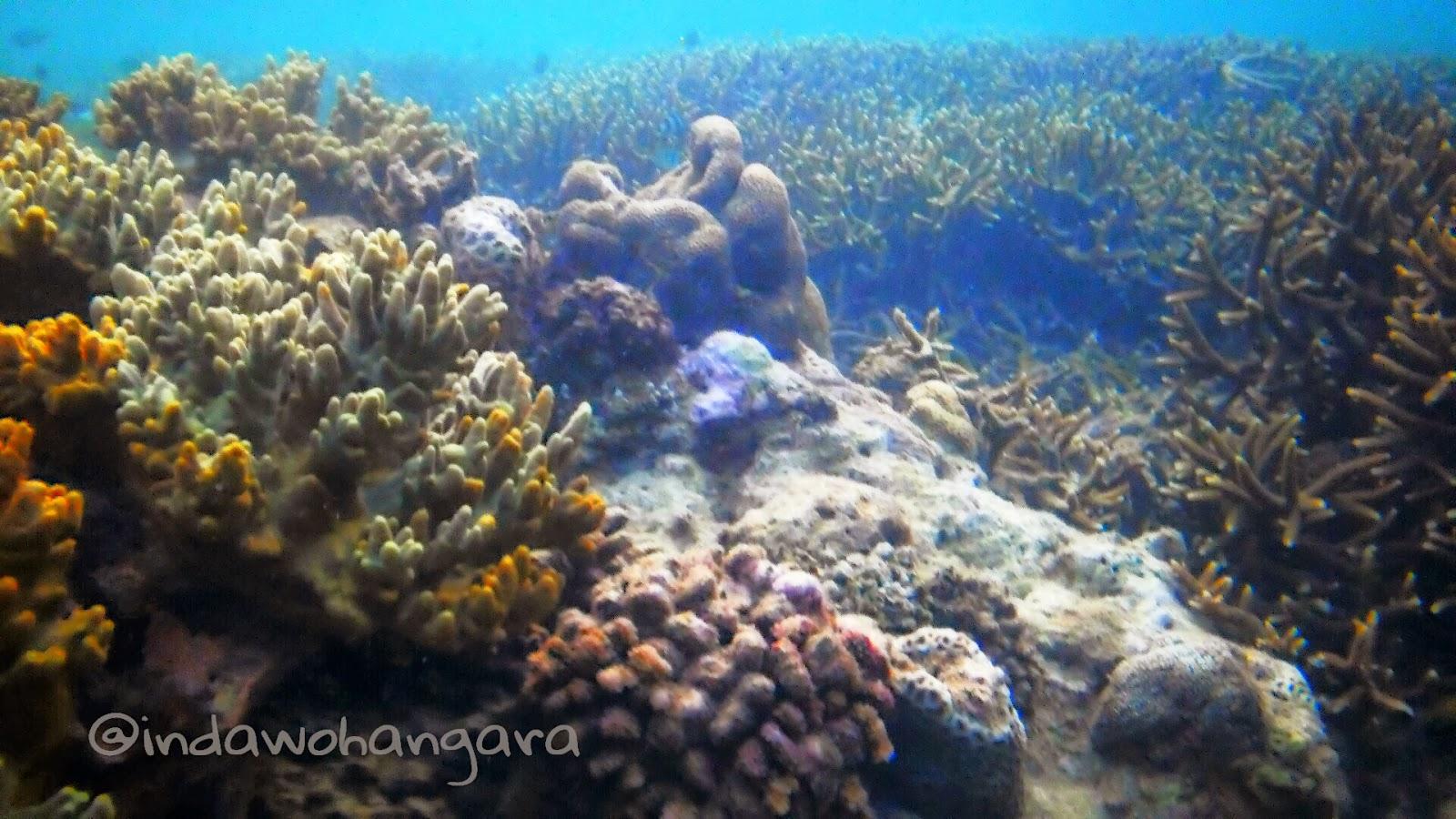 Inda Tapaleuk Bawah Laut Kupang 2 Terumbu Karang Ikan Cantik