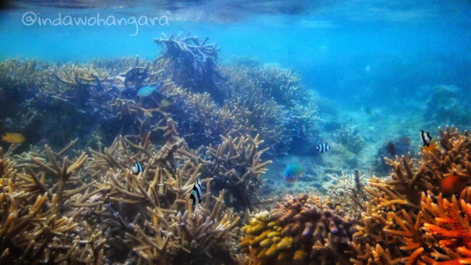 Inda Tapaleuk Bawah Laut Kupang Pantai Koepan Kab