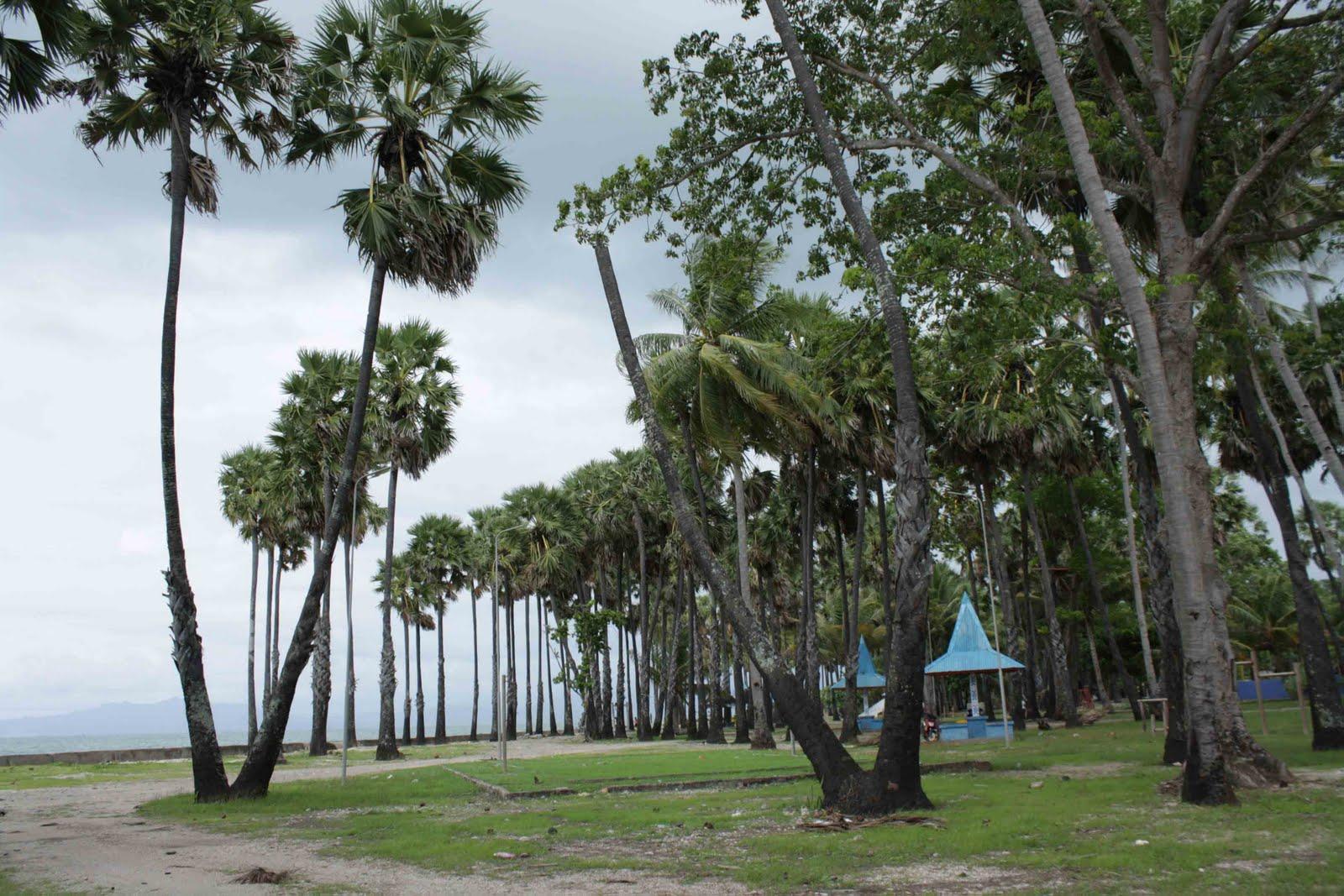 Kupang Amazing Tourism Place Mengunjungi Pulau Rote Pantai Lasiana Obyek