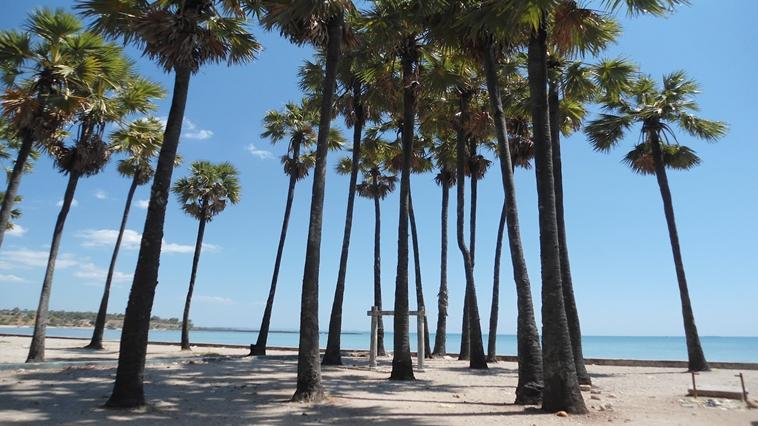 Lasiana Beach Tourist Icon Kupang City Pantai Kab