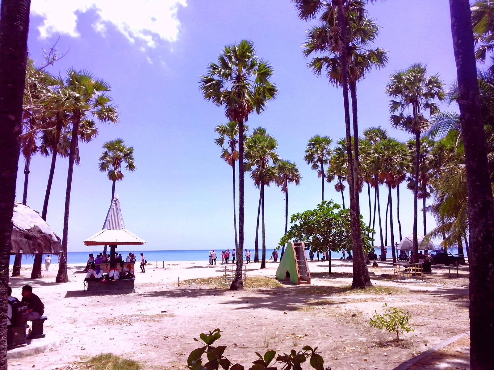 Pantai Lasiana Background Pohon Lontar Gambarbagus Kab Kupang