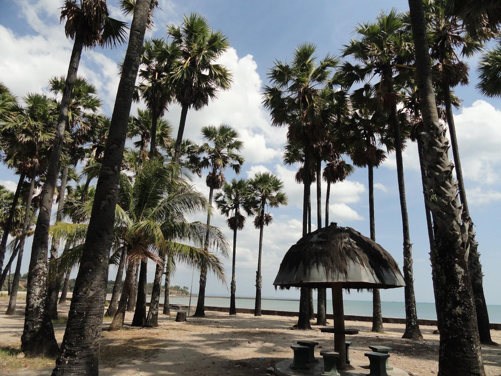 Pantai Lasiana Finest Creative Website East Indonesia Kab Kupang