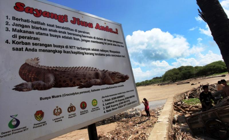 Waspada Buaya Berkeliaran Pantai Obyek Wisata Kupang Portal Peringatan Lasiana