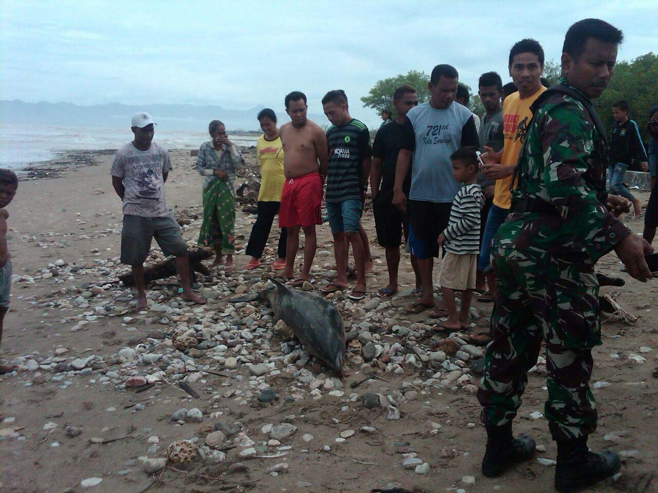 Naas Lumba Mati Terdampar Pantai Manikin Kupang Kab
