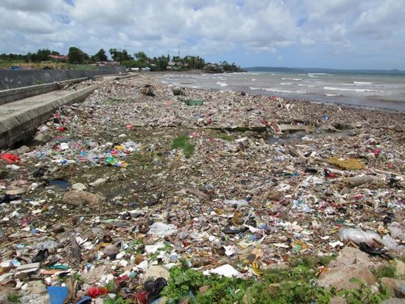 Atoin Amaf Menata Pantai Kupang Kamomos Babi Kotor Berlumpur Tak