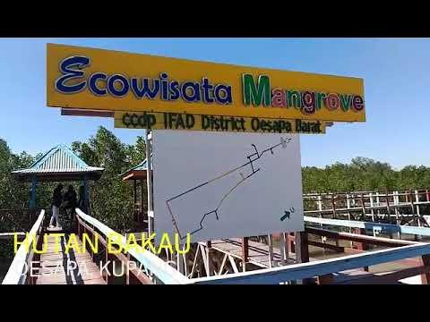 Hutan Bakau Oesapa Kupang Ntt Youtube Pantai Nunsui Kab