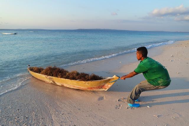 3 Pantai Unik Tak Biasa Nusa Tenggara Timur Tablolong Kupang