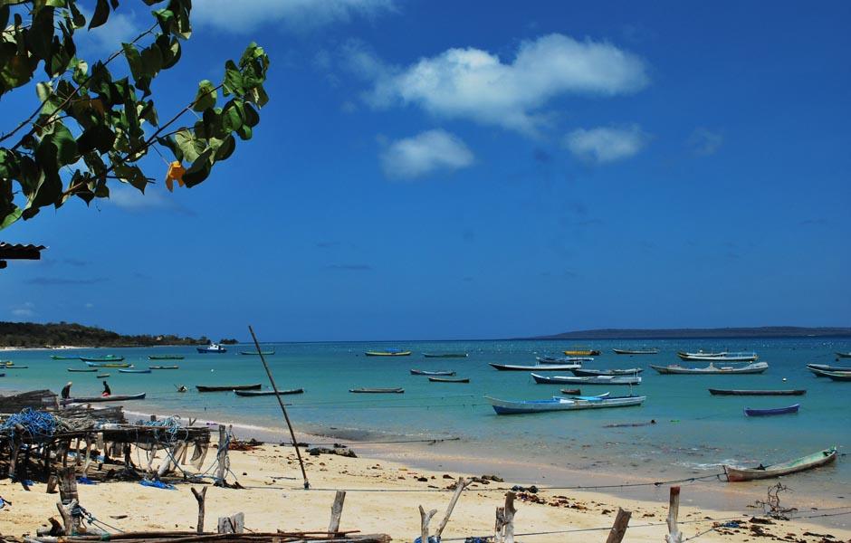 Rumput Laut Desa Tablolong Mendunia Pantai Kab Kupang