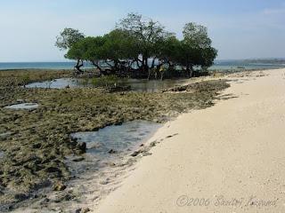 Taman Nasional Tablolong Kecamatan Kupang Barat Yhangiri32 Beach 1 Pantai