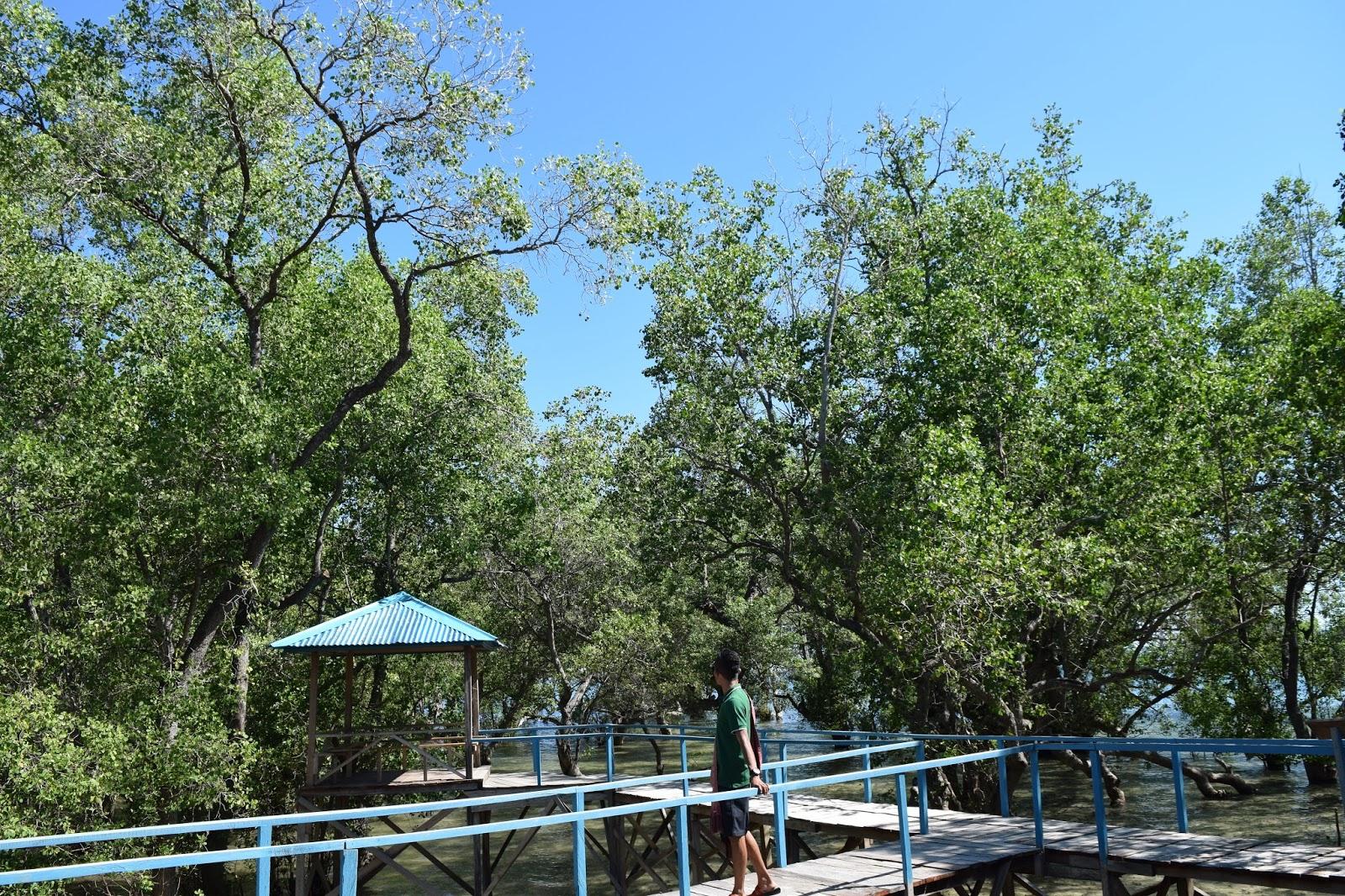 Arianto Ntt Jembatan Mangrove Kota Kupang Pantai Tedis Kab