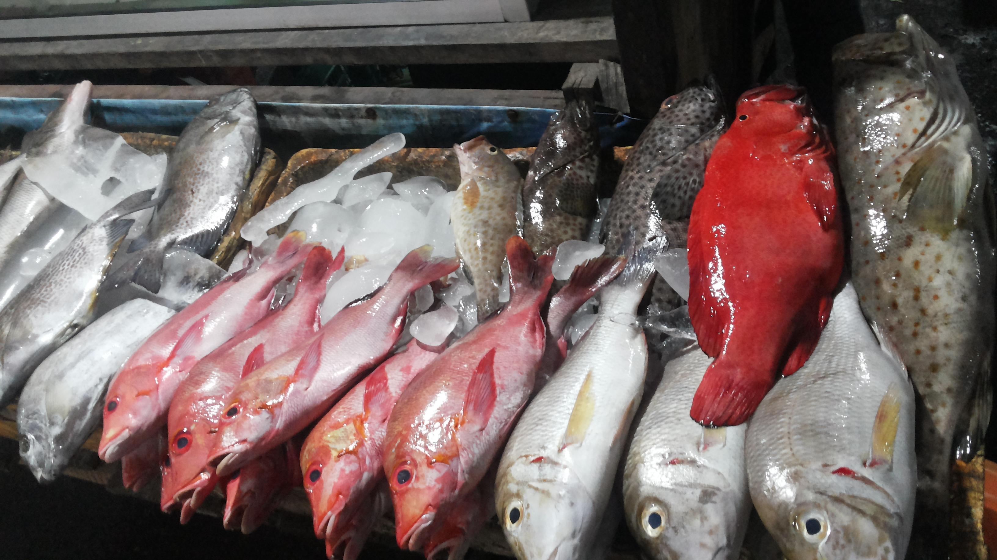 Kuliner Pasar Malam Kota Kupang Rasa Jawa Kita Beragam Ikan