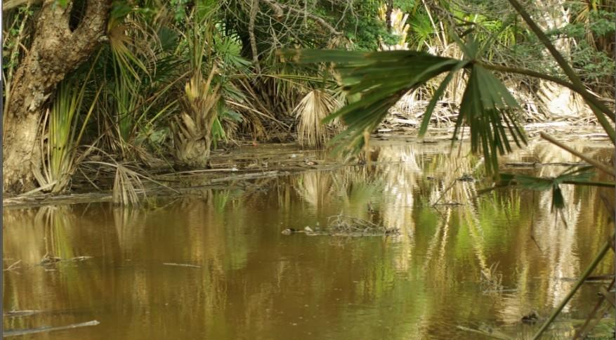 Makan Ikan Bakar Kampung Solor Kota Tua Kupang Nusa Tenggara