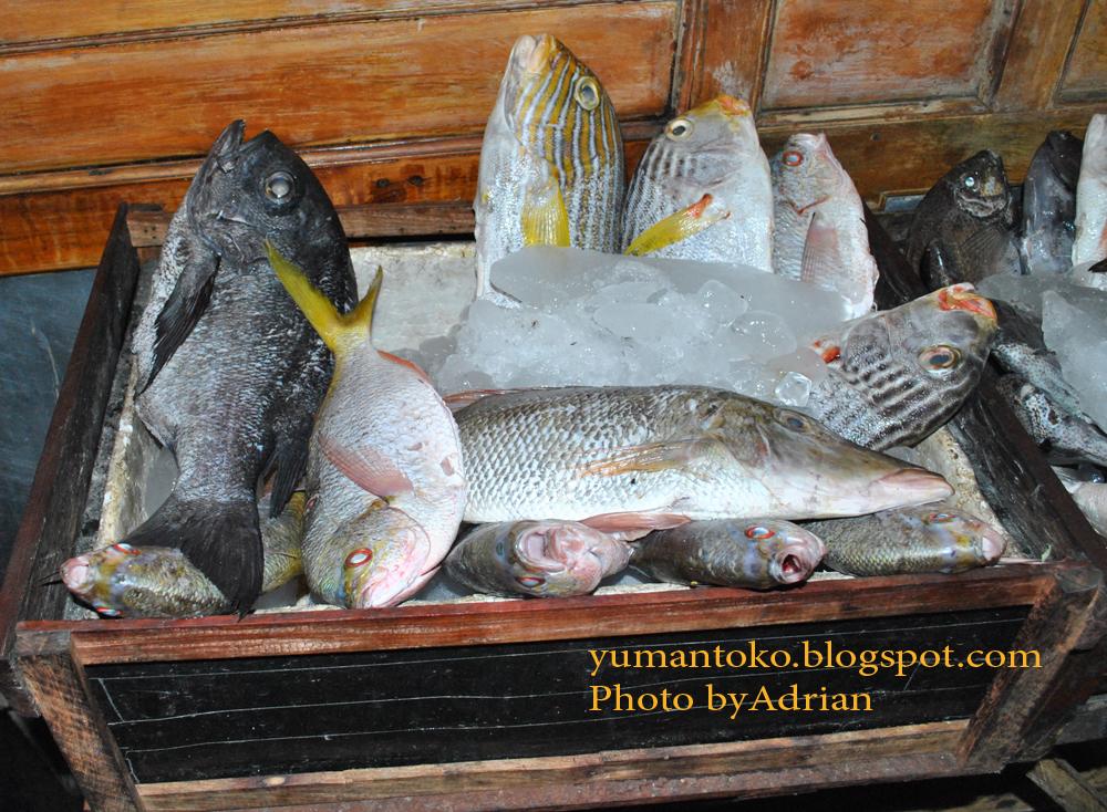 Menikmati Malam Kampung Solor Kupang Ntt Ikan Dijual Pasar Kab