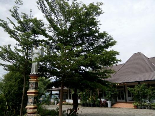 Ketapang Kencana Oleh Sebab Bingung Pohon Jenis Berkunjunglah Taman Ziarah