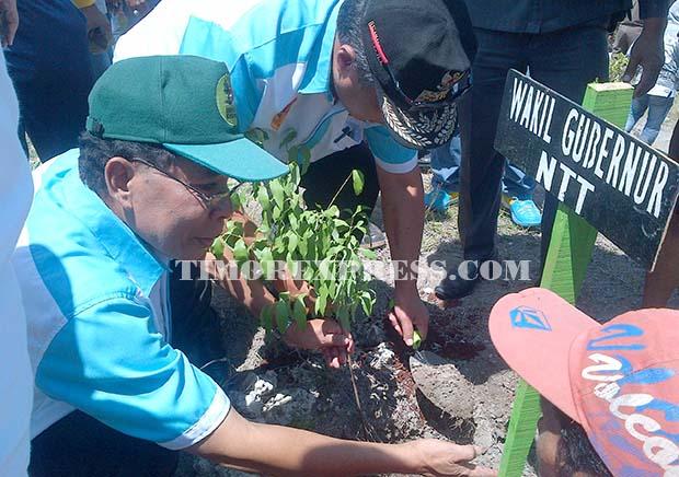 Lahan Kritis Indonesia 24 3 Juta Hektare Timor Express Wakil