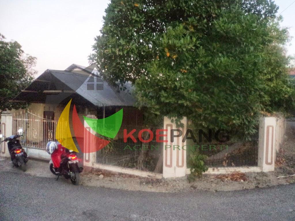 Koepang Agen Properti September 2014 Luas Tanah 365 M2 Lokasi