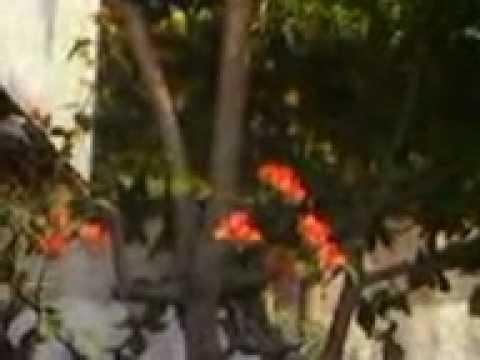 Camplong Ntt Youtube Taman Wisata Alam Kab Kupang