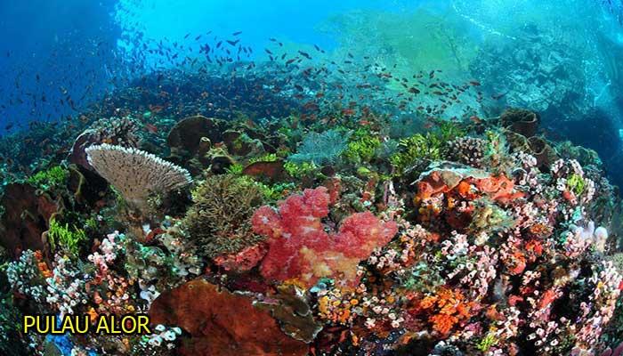 Daftar Lengkap Tempat Wisata Terbaru Nusa Tenggara Timur Taman Alam
