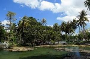 Hutan Camplong Wisata Nusa Tenggara Taman Alam Kab Kupang