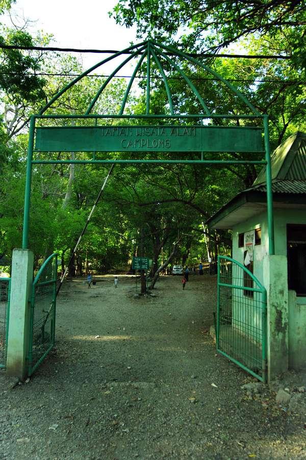 Hutan Wisata Camplong Indonesian Foto 3 4rusa Timor 2 4gerbang
