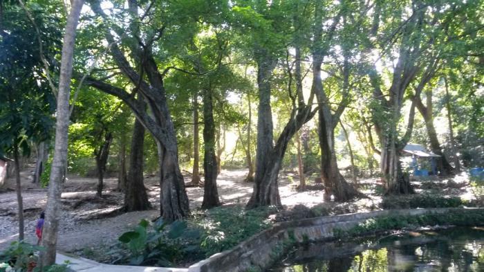 Taman Wisata Alam Camplong Manjakan Mata Hutan Air Buaya Kab