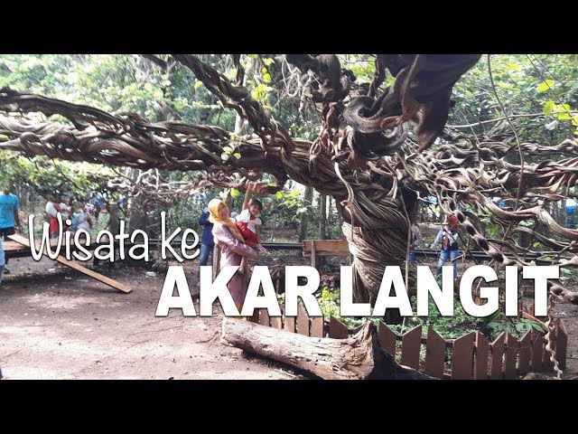 Akar Langit Pohon Trinil Unik Wisata Alam Lamongan Actionmv Istana