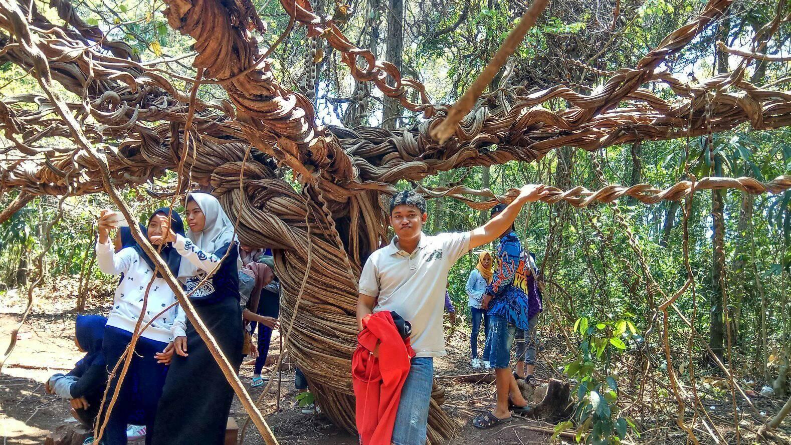 Riri Blog Tempat Wisata Perlu Dikunjungi Lamongan Bukit Kapur Bluri