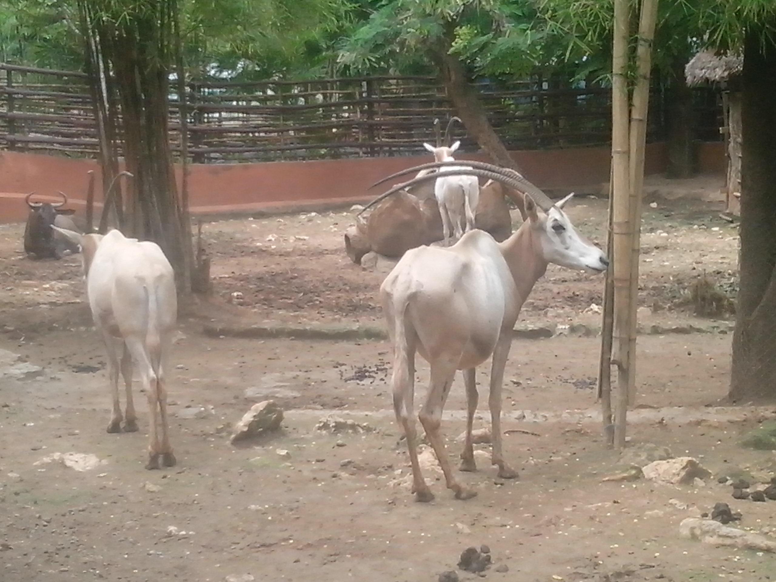 Belajar Rekreasi Wbl Goa Maharani Mts Negeri 4 Klaten Kebun