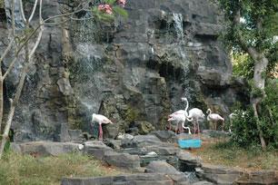 Coretan Pena Linda Tri Zulianti Mazoola Maharani Zoo Goa Lamongan