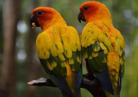 Goa Maharani Zoo Tempat Wisata Lamongan Htm Kebun Binatang Kab