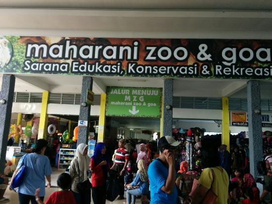 Jembatan Penyeberangan Mzg Maharani Zoo Goa Lamongan Kebun Binatang Kab