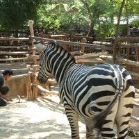 Maharani Zoo Goa Lamongan 22 Tips 917 Visitors Photo Amp