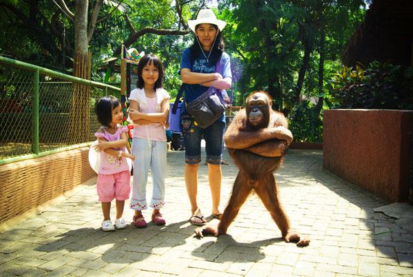 Maharani Zoo Jpg Hotel Murah Surabaya Kebun Binatang Goa Kab