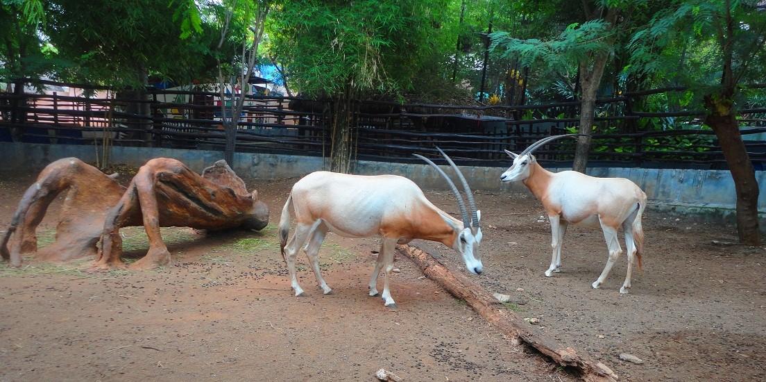 Melihat Keindahan Goa Aneka Satwa Maharani Zoo Wisata Jatim Taman