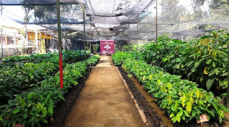 Wisata Edukasi Archives Reresepan Kampung Coklat Blitar Booming Gondang Outbond