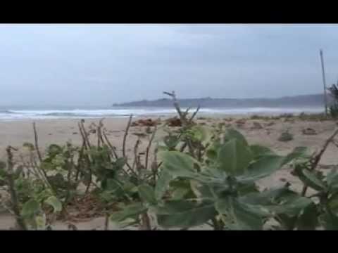 Turis Asing Surfing Kampung Wisata Pantai Sawarna Kabupaten Lebak Banten
