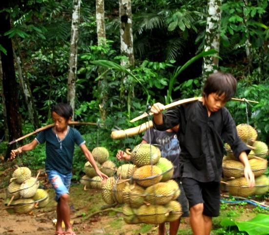 Sejarah Kampung Baduy Lebak Banten Menjual Duren Kepasar Perkampungan Tradisional
