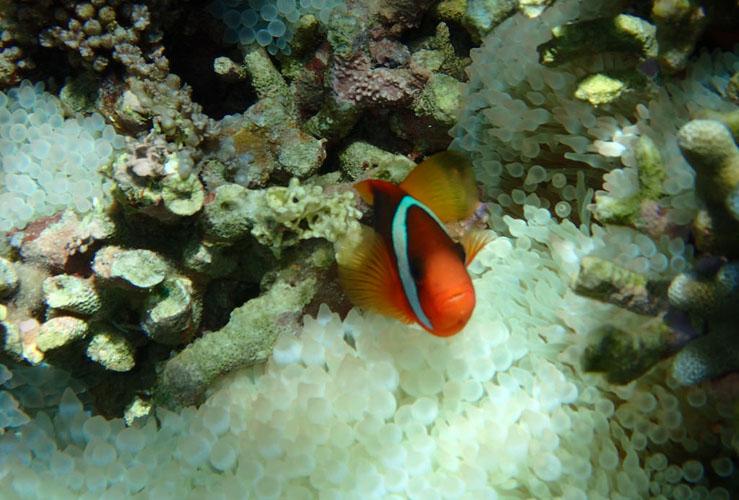 Day Trip Gili Nanggu Tangkong Sudak Kedis Description Kab Lombok