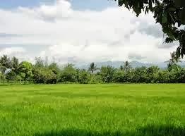 Agrowisata Lombok Wisata Gunung Pengsong Medan Dilalui Mencapai Puncak Tidaklah