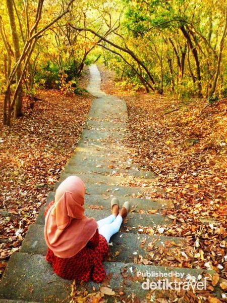 Gunung Pengsong Part Indah Rinjani Explore Lombok Dedaunan Gugur Menjadi