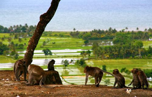 Pariwisata Pura Gunung Pengsong Kab Lombok Barat