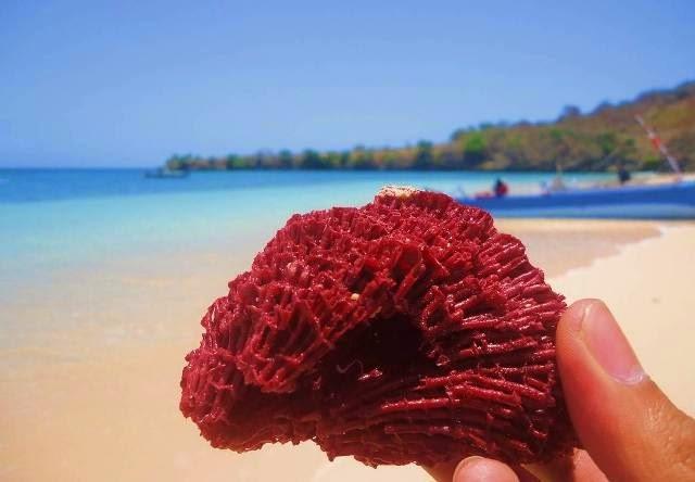 10 Foto Pantai Pink Beach Lombok Timur Rute Menuju Lokasi