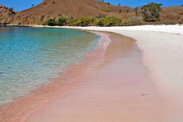 Keindahan Pantai Pink Pulau Lombok Pesona Unik Kab Timur